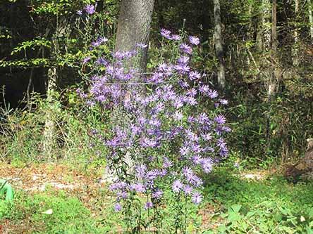 Plants we grow - availability may vary